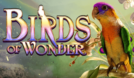 birds-of-wonder